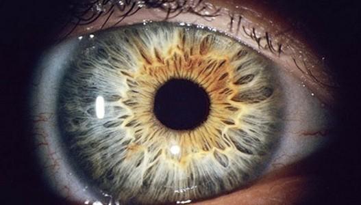 ljudsko oko_527_300