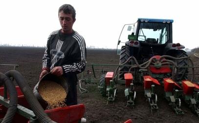 Припрема сетве кукуруза